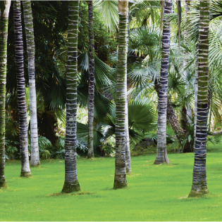 PIC_Palm_Forest